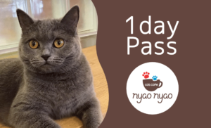 cat cafe nyao nyao 1day pass