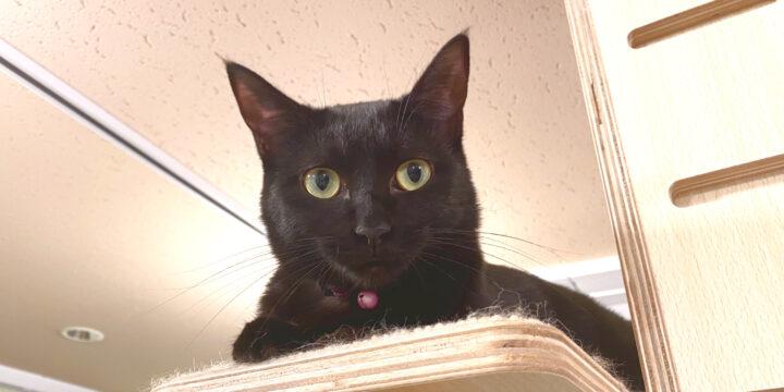 黒猫ローラ