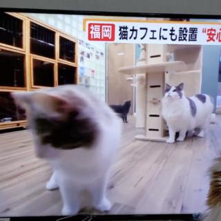TNCテレビ放送